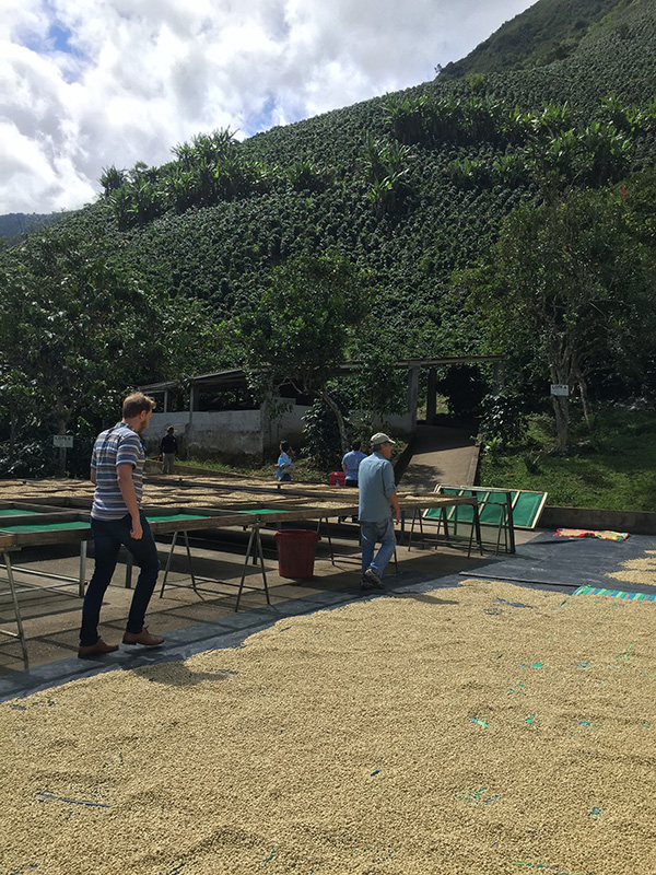 coffee-tours-hacienda-primavera-galletti-15