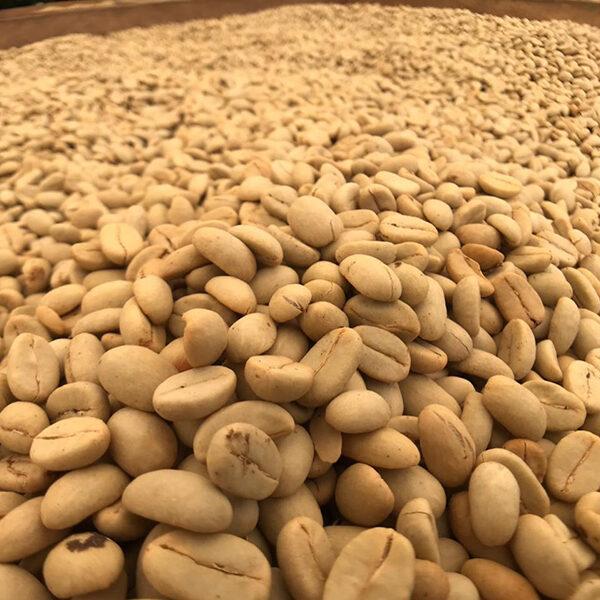 coffee-tours-hacienda-primavera-galletti-5